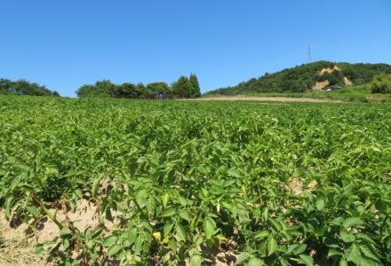 就農者の写真2